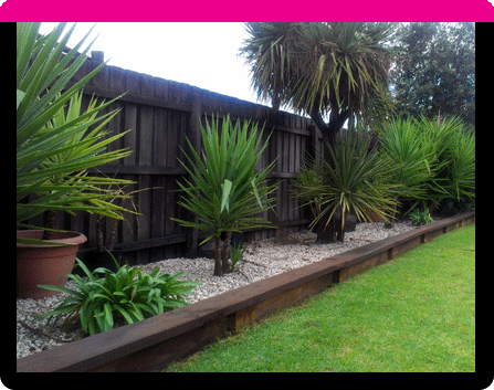 this garden bed has been raised slightly higher than the lawn area with a clever use of treated pine sleepers that have then been stained to give a rich